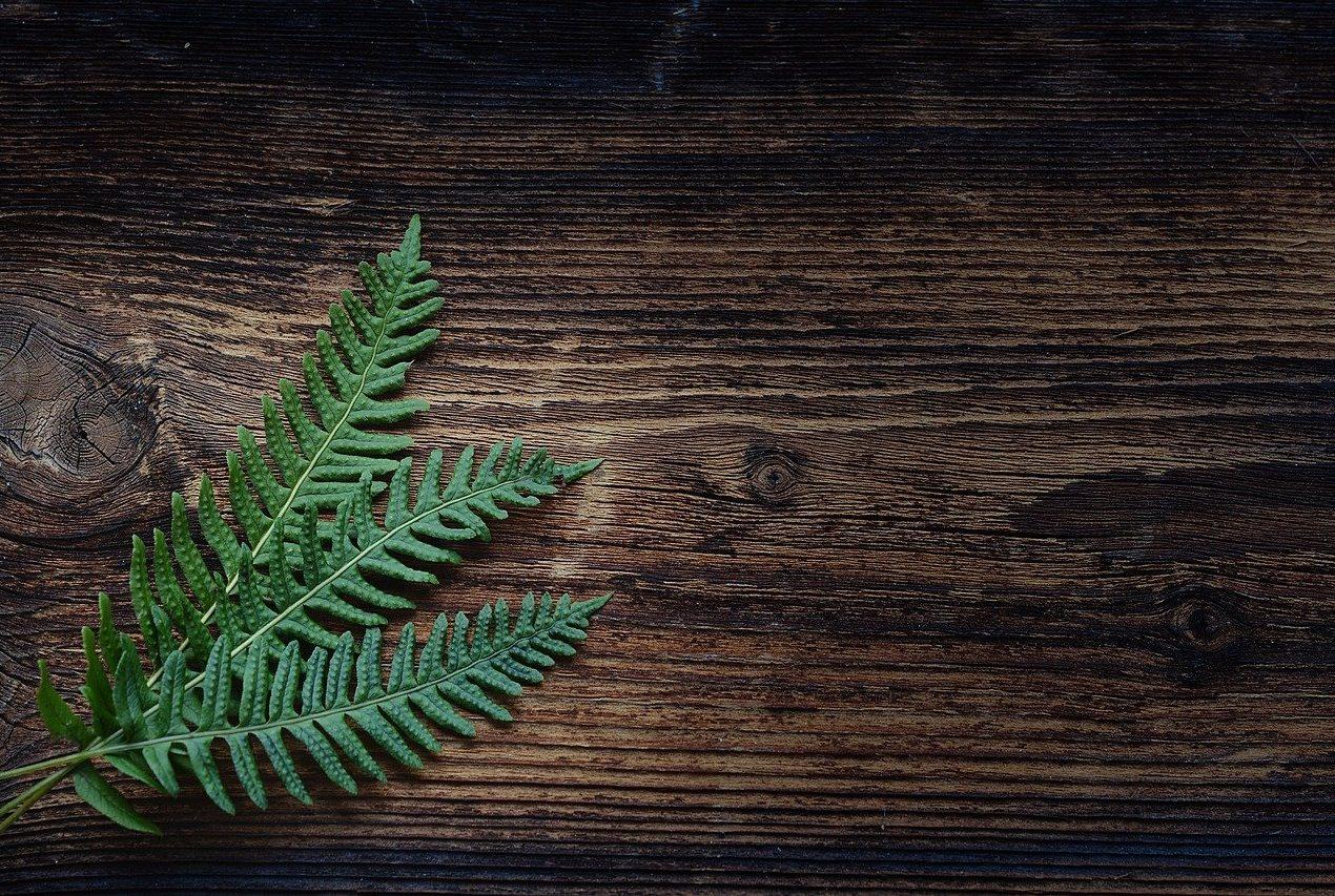 Comment consommer des plantes ?